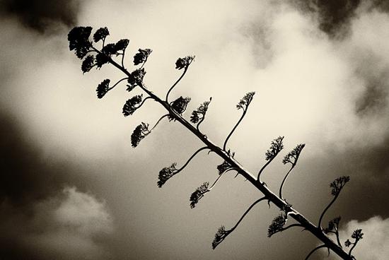 Fotografía de Juanfran Berbejal