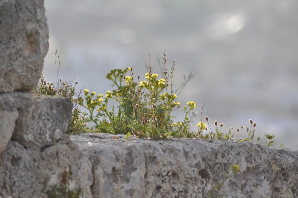 Foto de Luis Guerrero (La Flor, el Sol y la Roca)